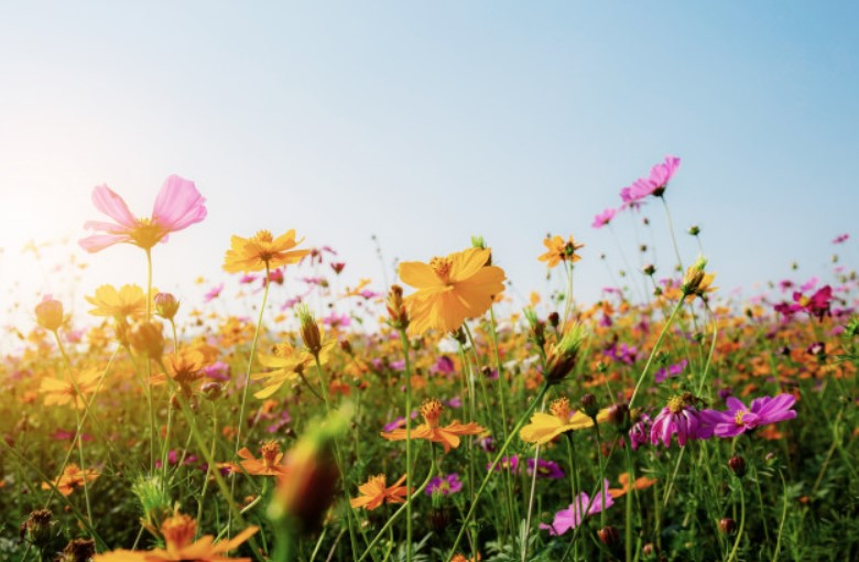 fiori-profumo-estivo